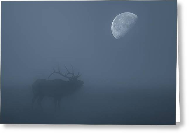 Bugle At The Moon Greeting Card by Darren White