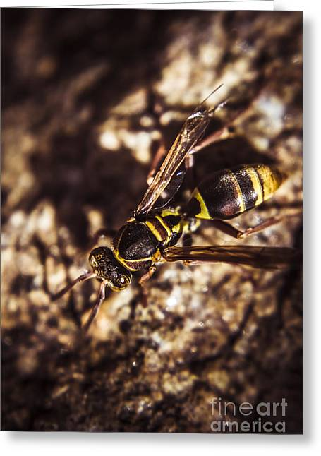 Bugs Life Greeting Card by Jorgo Photography - Wall Art Gallery