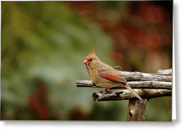 Building A Home Greeting Card by Debbie Oppermann