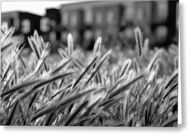 Buildings Are Growing Behind The Grass Greeting Card by Alessandra RC