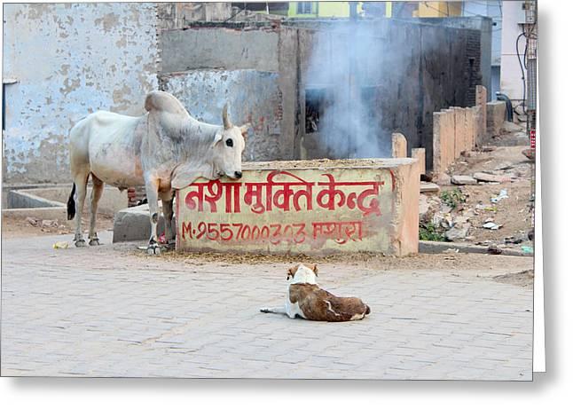 Bull And Dog, Vrindavan Greeting Card by Jennifer Mazzucco