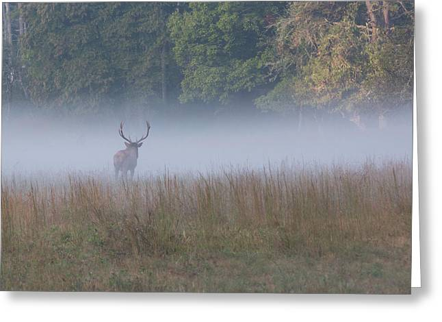 Bull Elk Disappearing In Fog - September 30 2016 Greeting Card