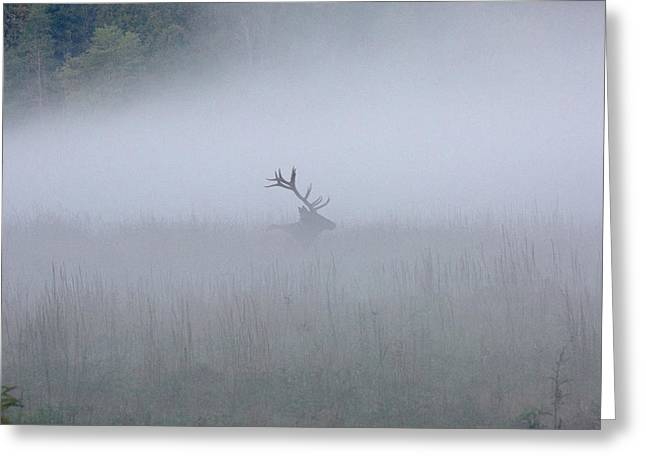 Bull Elk In Fog - September 30, 2016 Greeting Card