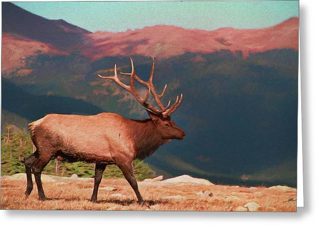 Bull Elk On Trail Ridge Road Greeting Card by Dan Sproul