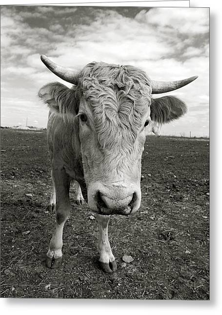Bull Greeting Card by Jimmy Bruch