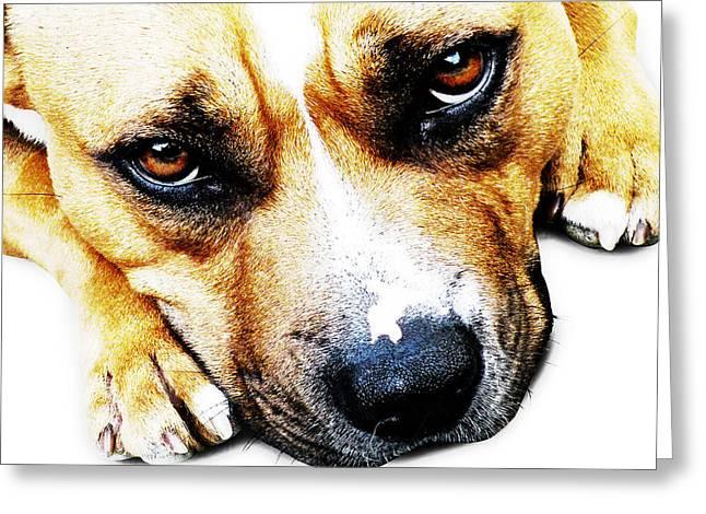 Bull Terrier Eyes Greeting Card by Michael Tompsett