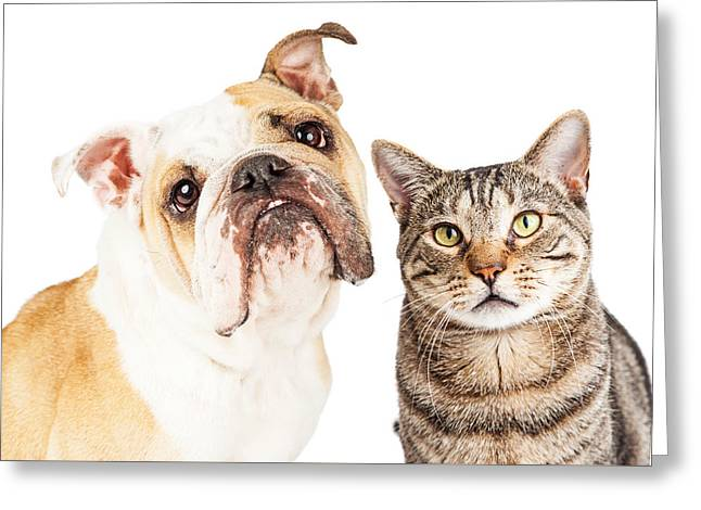 Bulldog And Tabby Cat Close-up Greeting Card by Susan Schmitz