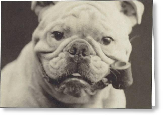 Bulldog Smoking A Pipe Greeting Card by English School