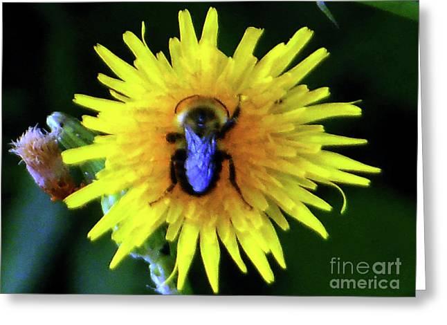 Bullseye Bumblebee Dandelion Greeting Card
