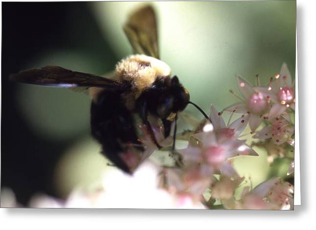 Bumblbee Bzzz Greeting Card by Curtis J Neeley Jr