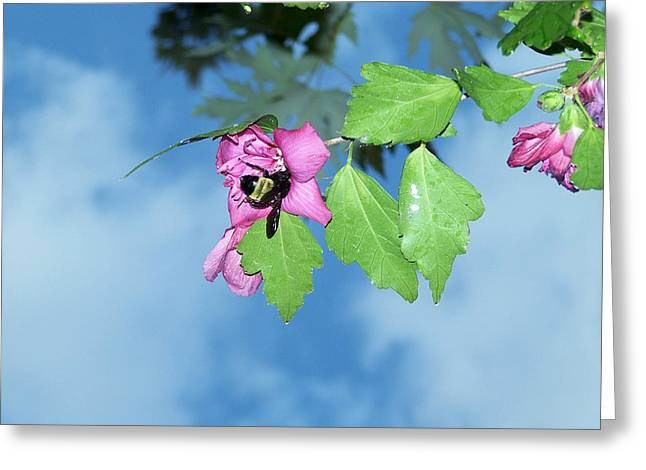Bumble Bee 2 Greeting Card by Evelyn Patrick