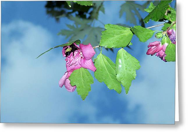 Bumble Bee Greeting Card by Evelyn Patrick
