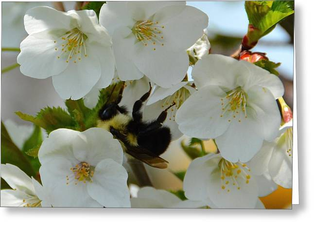 Bumble Bee In Hiding Greeting Card