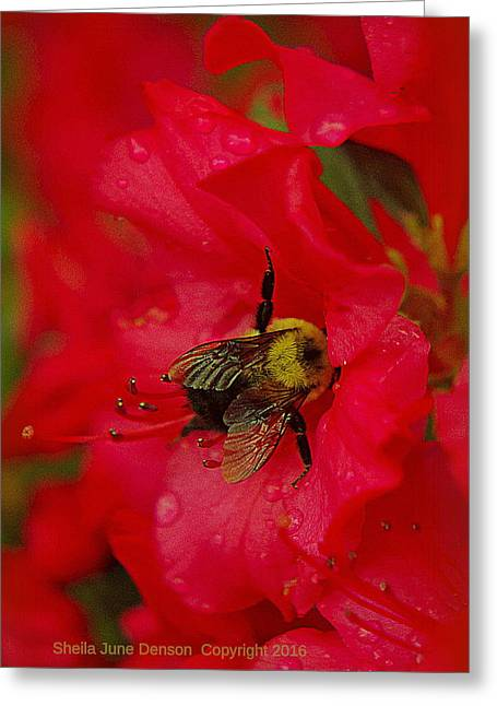 Bumble Bee In Red Greeting Card by Sheila June Denson