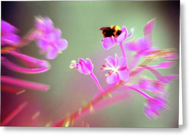 Bumble Bee On Wildflower Greeting Card