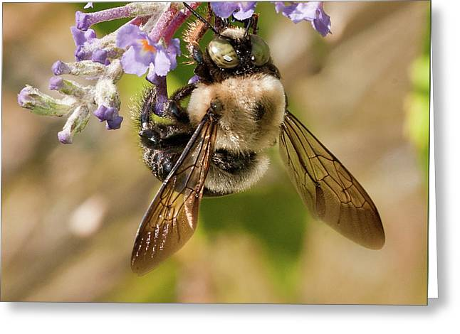 Greeting Card featuring the photograph Bumble Bee Up Close And Personal by Lara Ellis