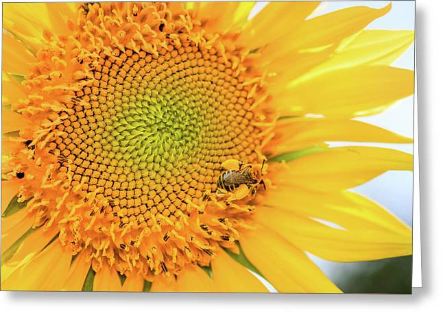 Bumble Bee With Pollen Sacs Greeting Card