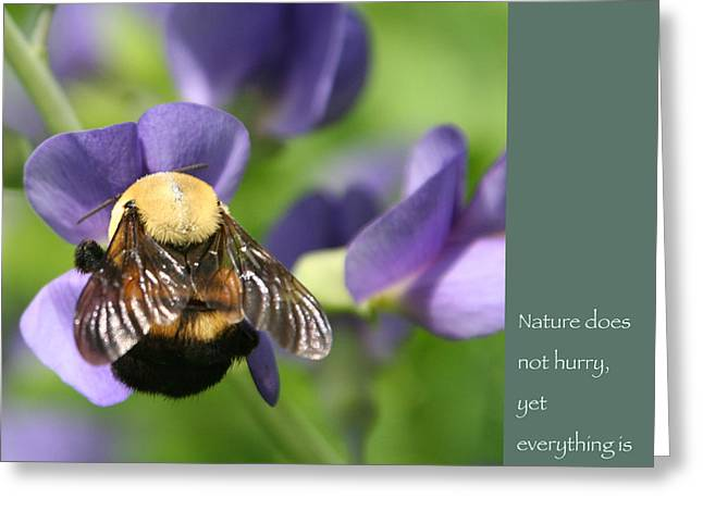 Bumble Bee With Zen Quote Greeting Card
