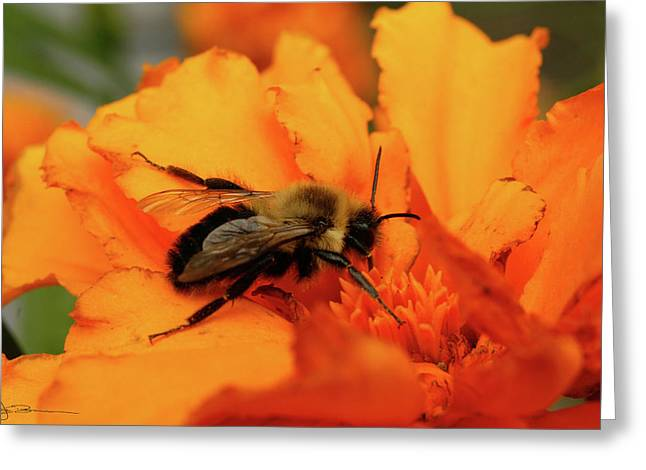 Bumble Orange Greeting Card