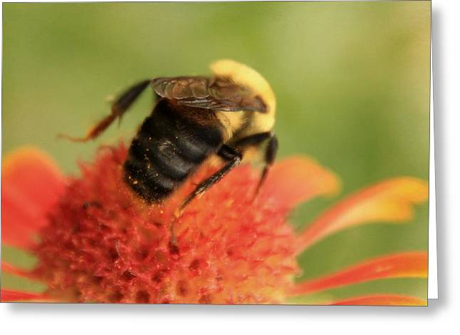 Greeting Card featuring the photograph Bumblebee by Chris Berry