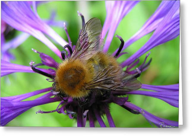 Bumblebee In Blue Greeting Card