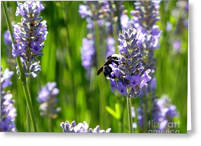 Bumblebee On Lavender 2 Greeting Card