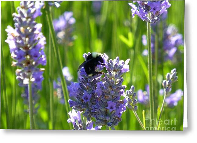 Bumblebee On Lavender Greeting Card