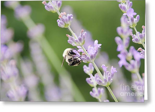 Greeting Card featuring the photograph Bumblebee On The Lavender Field 2 by Andrea Anderegg