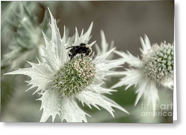 Bumblebee On Thistle Flower Greeting Card
