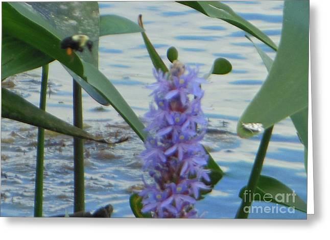 Bumblebee Pickerelweed Moth Greeting Card