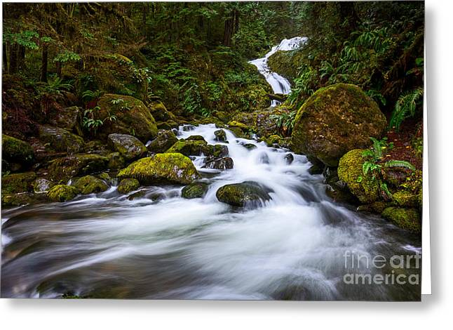 Bunch Creek Falls In The Olympic National Park Of Wash Greeting Card by Jamie Pham