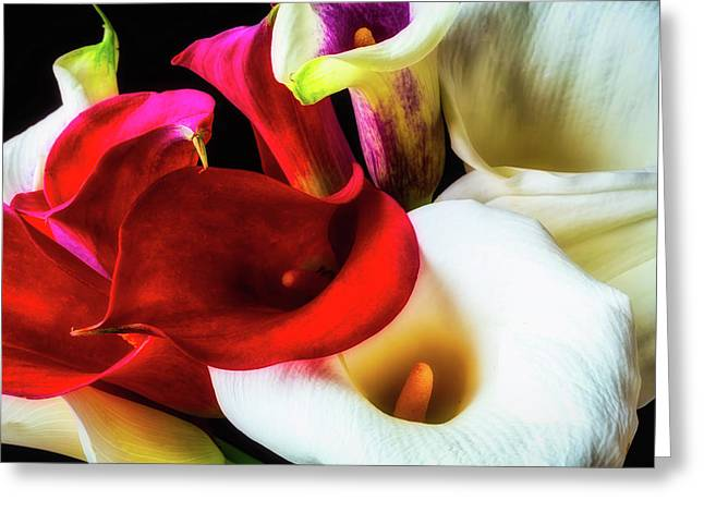 Bunch Of Beautiful Calla Lilies Greeting Card