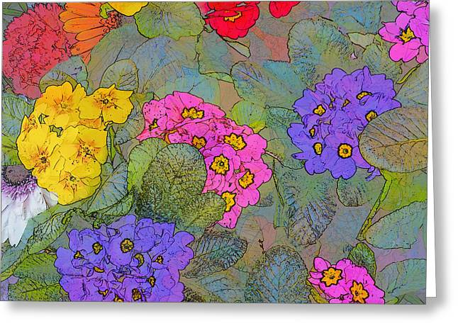 Bunch Of Colorful Primroses Greeting Card