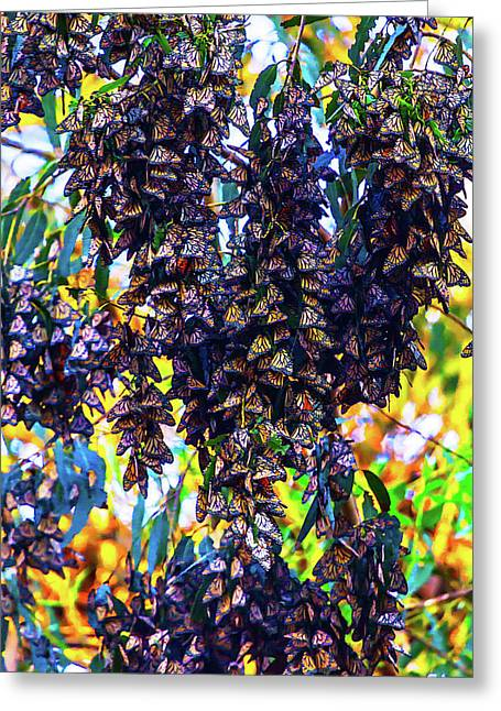 Bunches Of Monarchs Greeting Card