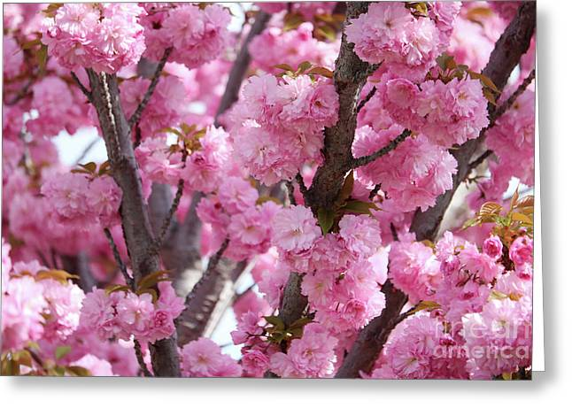 Bunches Of Pink Blossoms Greeting Card