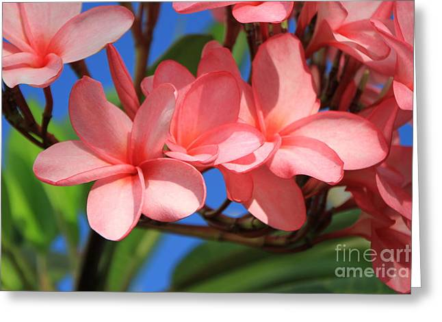 Greeting Card featuring the photograph Bunches Of Pink Plumerias by Edward R Wisell