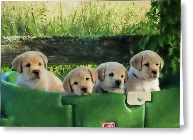 Bundles Of Joy - Labrador Art Greeting Card
