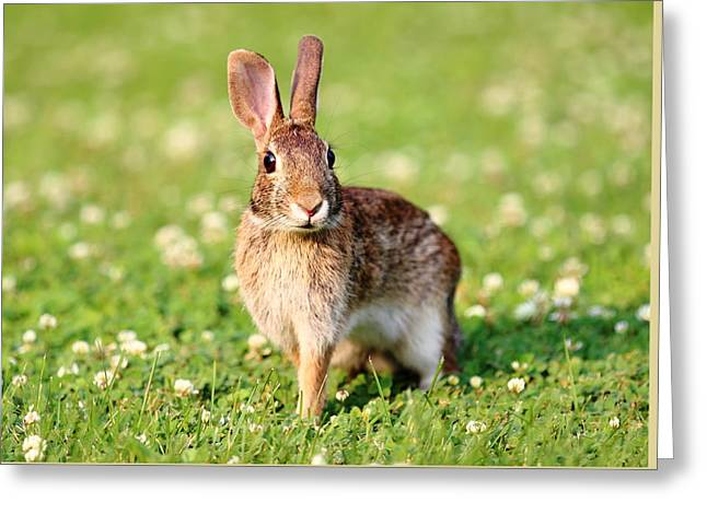 Bunny Hop Greeting Card by Brian Manfra
