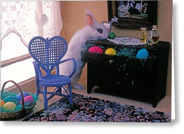 Lace Curtains Greeting Cards - Bunny in small room Greeting Card by Garry Gay