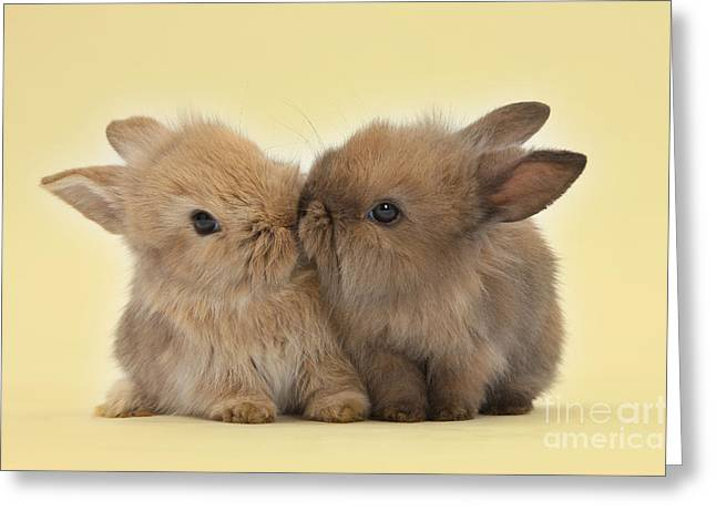 Bunny Kisses Greeting Card