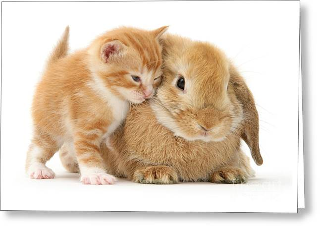 Bunny Love Greeting Card