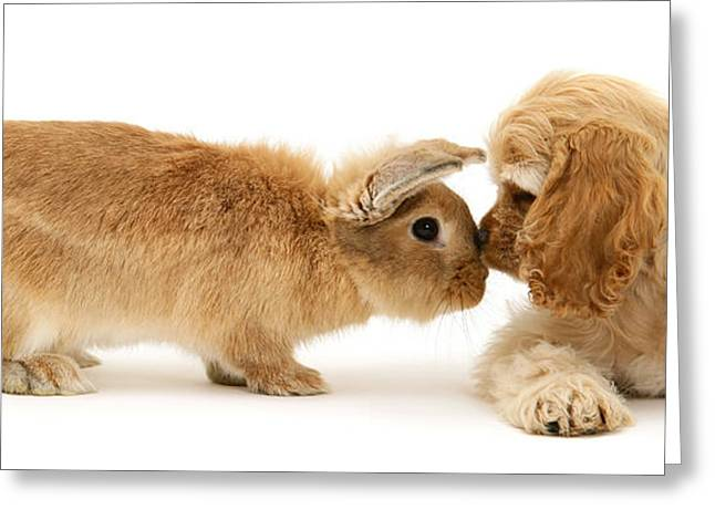 Bunny Nose Best Greeting Card