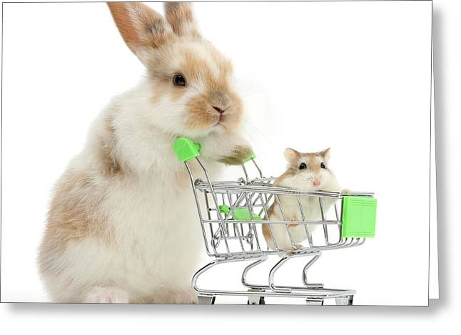 Bunny Shopping Greeting Card