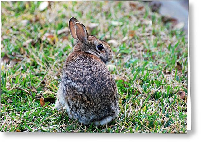 Greeting Card featuring the photograph Bunny by Teresa Blanton