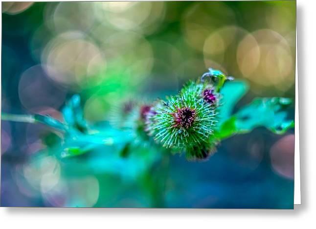 Burdock Bloom Superstar Greeting Card