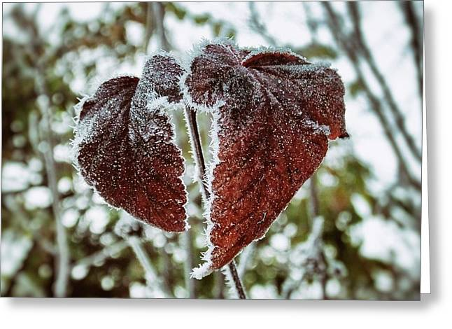Burgundy Frost Greeting Card