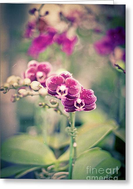 Burgundy Orchids Greeting Card by Ana V Ramirez