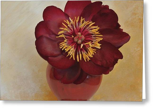 Burgundy Peony Greeting Card by Marsha Heiken