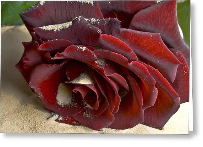 Burgundy Rose Greeting Card by Svetlana Sewell