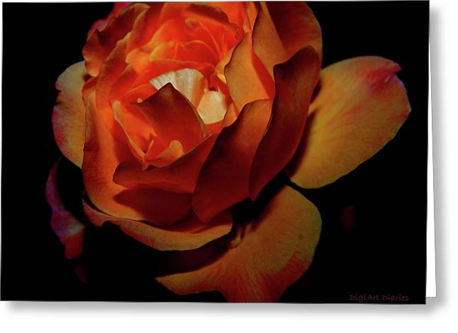 Rose Petals Greeting Cards - Burning Ember Rose Greeting Card by DigiArt Diaries by Vicky B Fuller